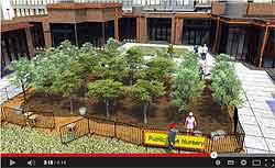 Public-Tree-Nursery